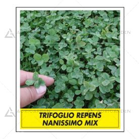 Seme per prato Padana Sementi TRIFOGLIO NANISSIMO MIX lattina da 0,5 KG